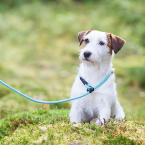 ROPE RETRIEVER LEASH AQUA