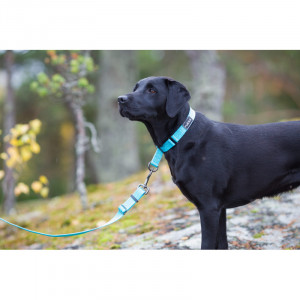 COZY LEASH AQUA