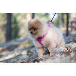 MINI COMFORT HARNESS LIGHT PINK