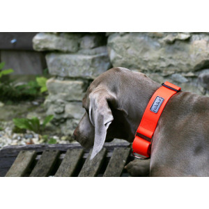 DROP WEB COLLAR ORANGE