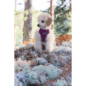 MINI COMFORT HARNESS VIOLET